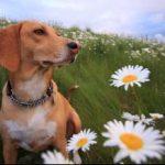 תמונה של כלב באביב
