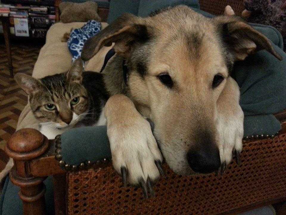 טנגו הכלב וחופשת הקייץ
