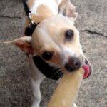 תמונה של כלב נותן ביס מארטיק