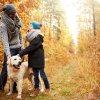 איך לטפל בכלב חולה שפעת