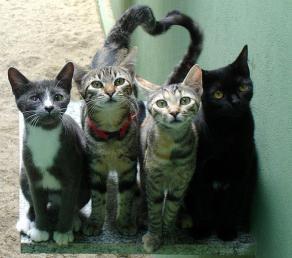 חבורת חתולים