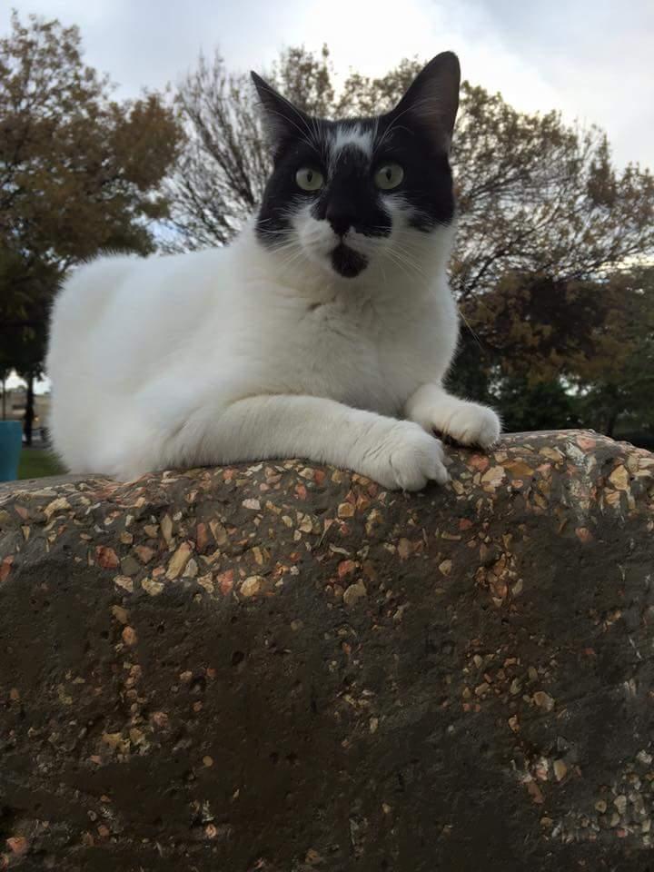 חתול בחופשה