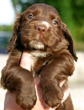 תמונה של כלב קטן מורם