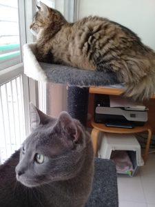 מתקן גרוד לחתולים