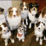 תמונה של כלבים מגזעים שונים