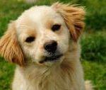 תמונה של כלב בוחן