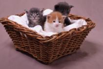 להכין את הבית לחתול