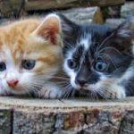 תמונה של 2 גורי חתולים