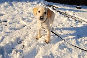 תמונה של כלב בשלג