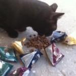 חתול מתענג על חטיפים