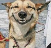 תמונה של כלב מחייך