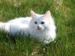 תמונה של חתול נח בדשא