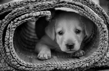 תמונה של כלב בתוך מחצלת מגולגלת