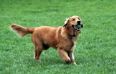 כלב משחק בפארק