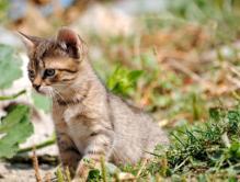 תמונה של חתול בדשא