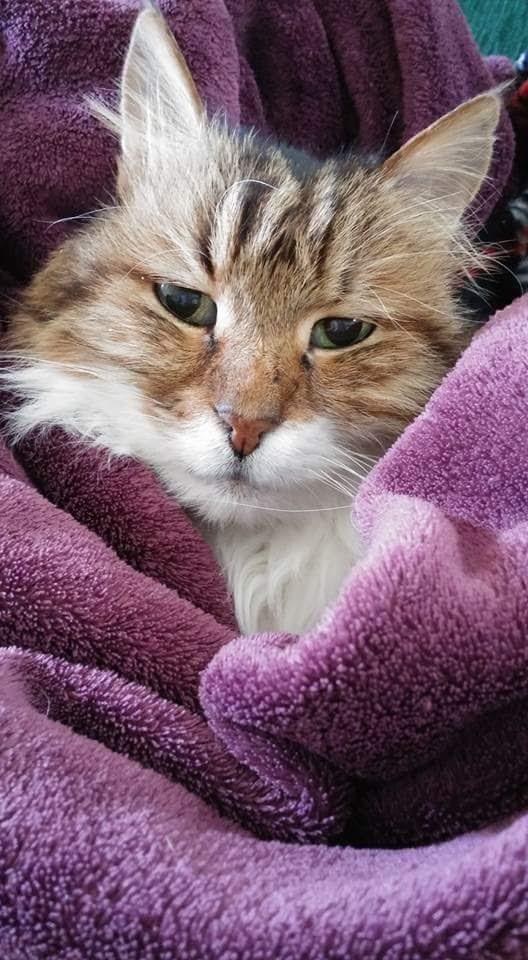 גור חתול חמוד