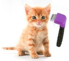 סירוק שיער חתול - מברשת קוצצת