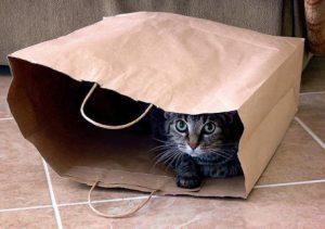 חתול מסתתר בשקית