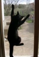 תמונה של חתול נדבק לחלון