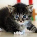 חתול נבהל