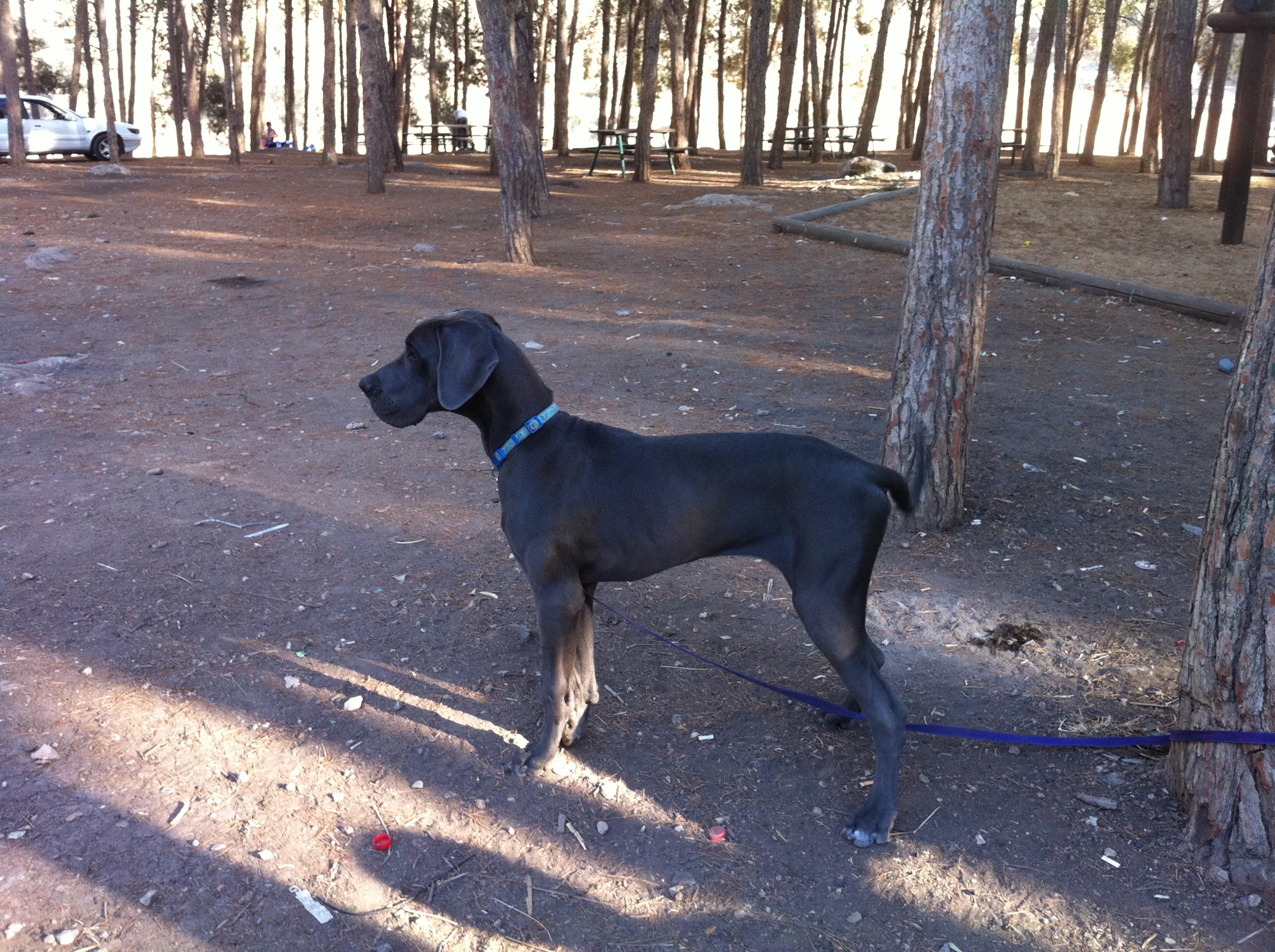 כלב קשור לעץ בשמורה