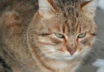תמונת של חתול שמן