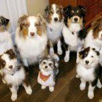 תמונה של קבוצת כלבים