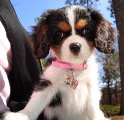 תמונה של כלבה עם קולר ורוד