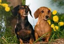 תמונה של כלבי בייגלה