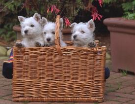 תמונה של כלבים בקופסא