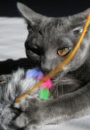 חתול משחק בחכת דג
