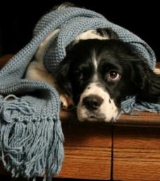תמונה של כלב עם שמיכה בחורף