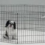 תמונה של גור כלבים בגדר