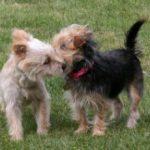 תמונה של כלבים אוהבים בפארק