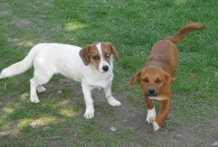 תמונה של הכרות בין כלבים