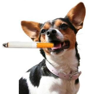 תמונה של כלב עם סיגריה