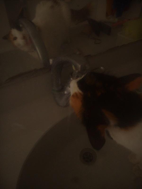 קיטי שותה מים