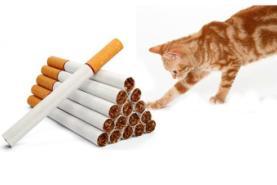 חתול נגד סיגריות