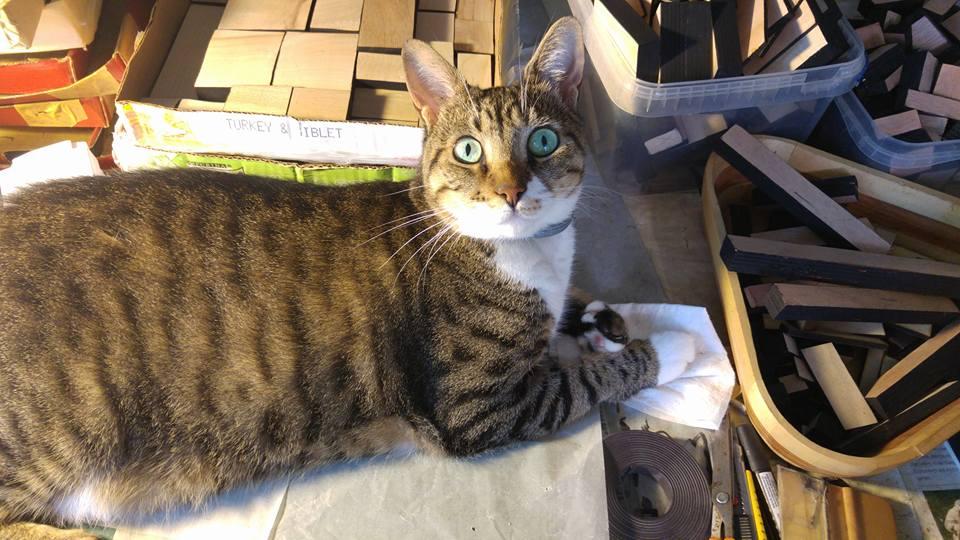 חתול משלשל