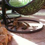 חתול בחצר