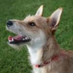 תמונה של כלב בפארק