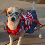תמונה של כלבה עם שמלה