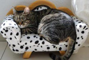 חתול על ספה