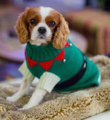 כלב עם סוודר