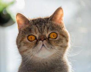 חתול מופתע