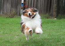 תמונה של כלב בריצה