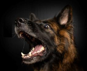 כלב עם שיניים לבנות