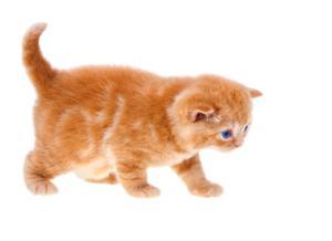 גור חתול לגמילה