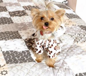 כלב על מיטה