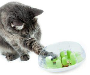 משחק מבוך לחתולים
